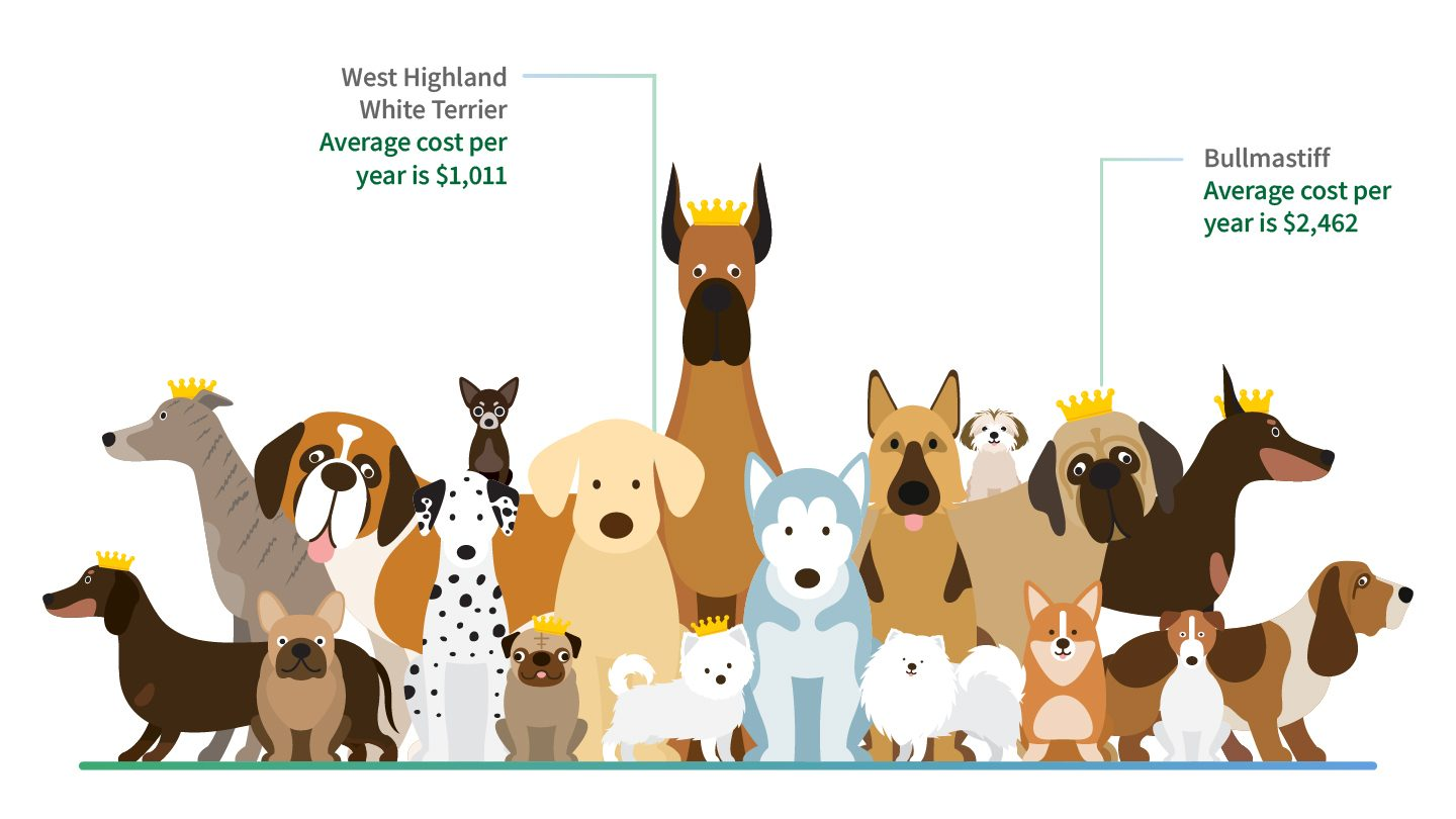 Average cost of pet insurance according to your dogs breed.