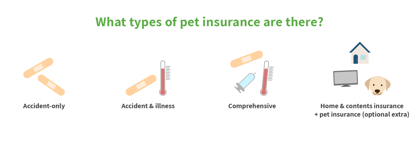 What types of pet insurance are there?
