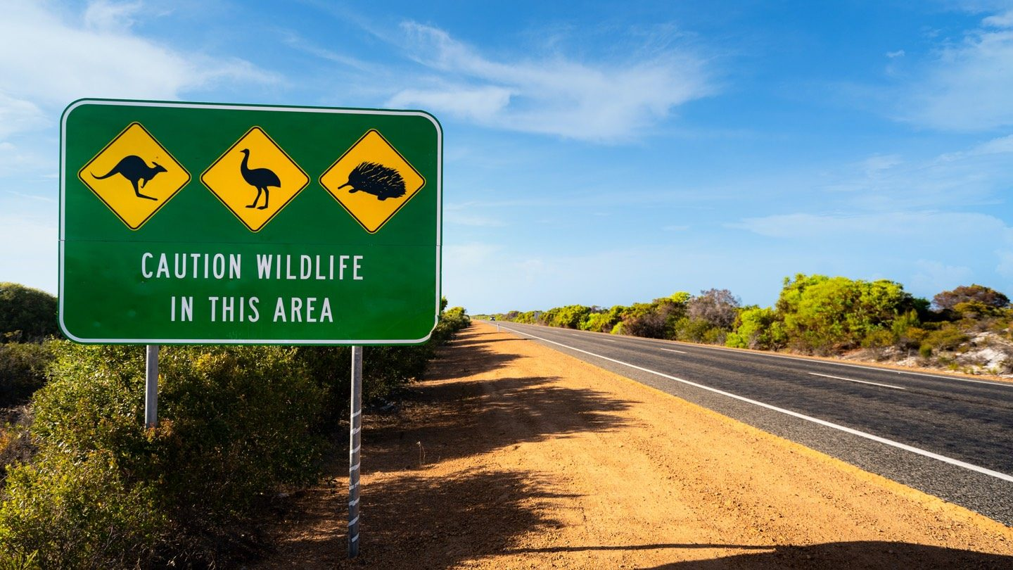 Road sign with warning that says 'caution wildlife in this area', symbolising car insurance rules in different states.
