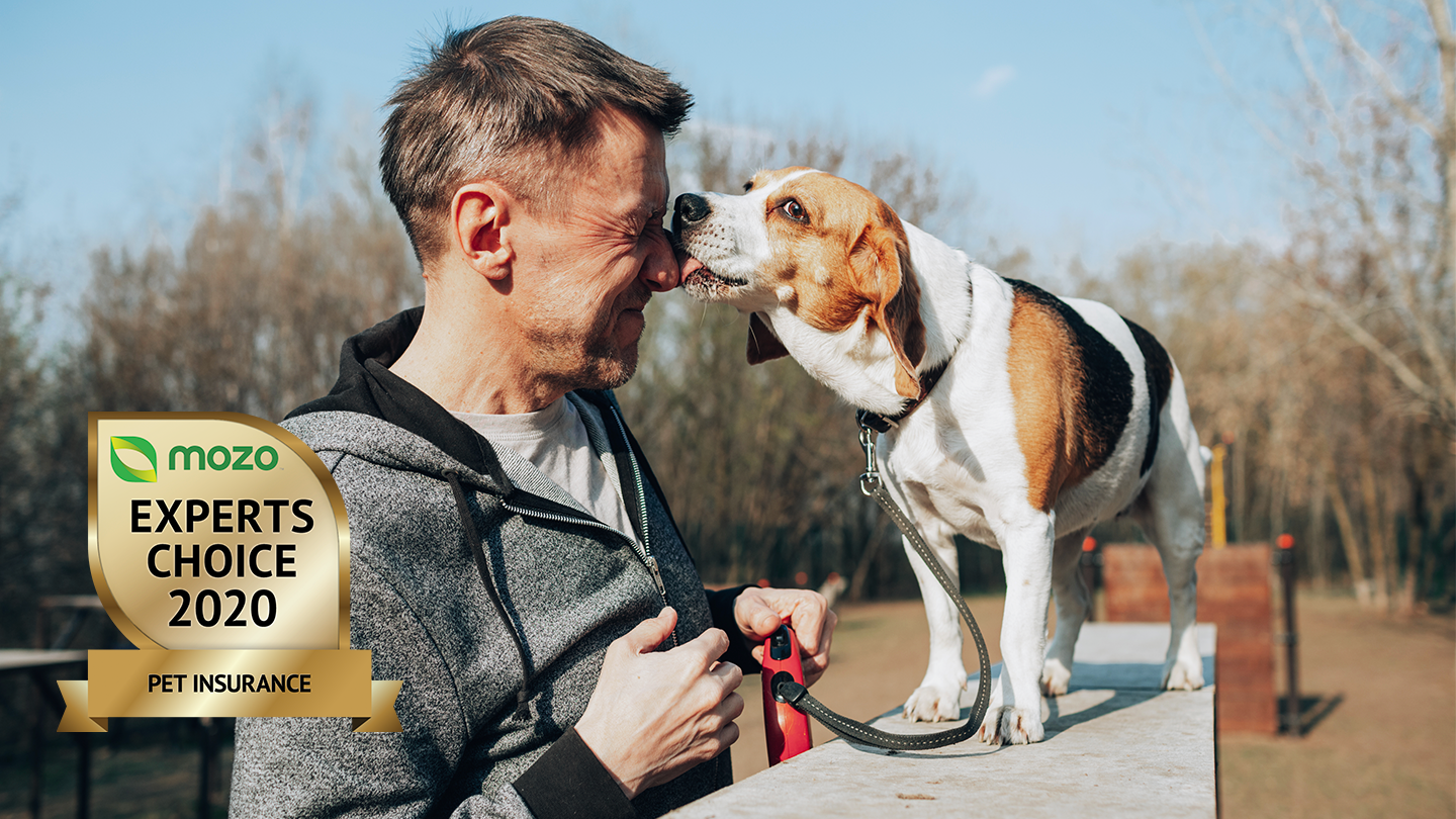 Dog standing on a wall, licking a man's face. Graphic image in the corner of the Mozo Experts Choice 2020 badge for Pet Insurance.