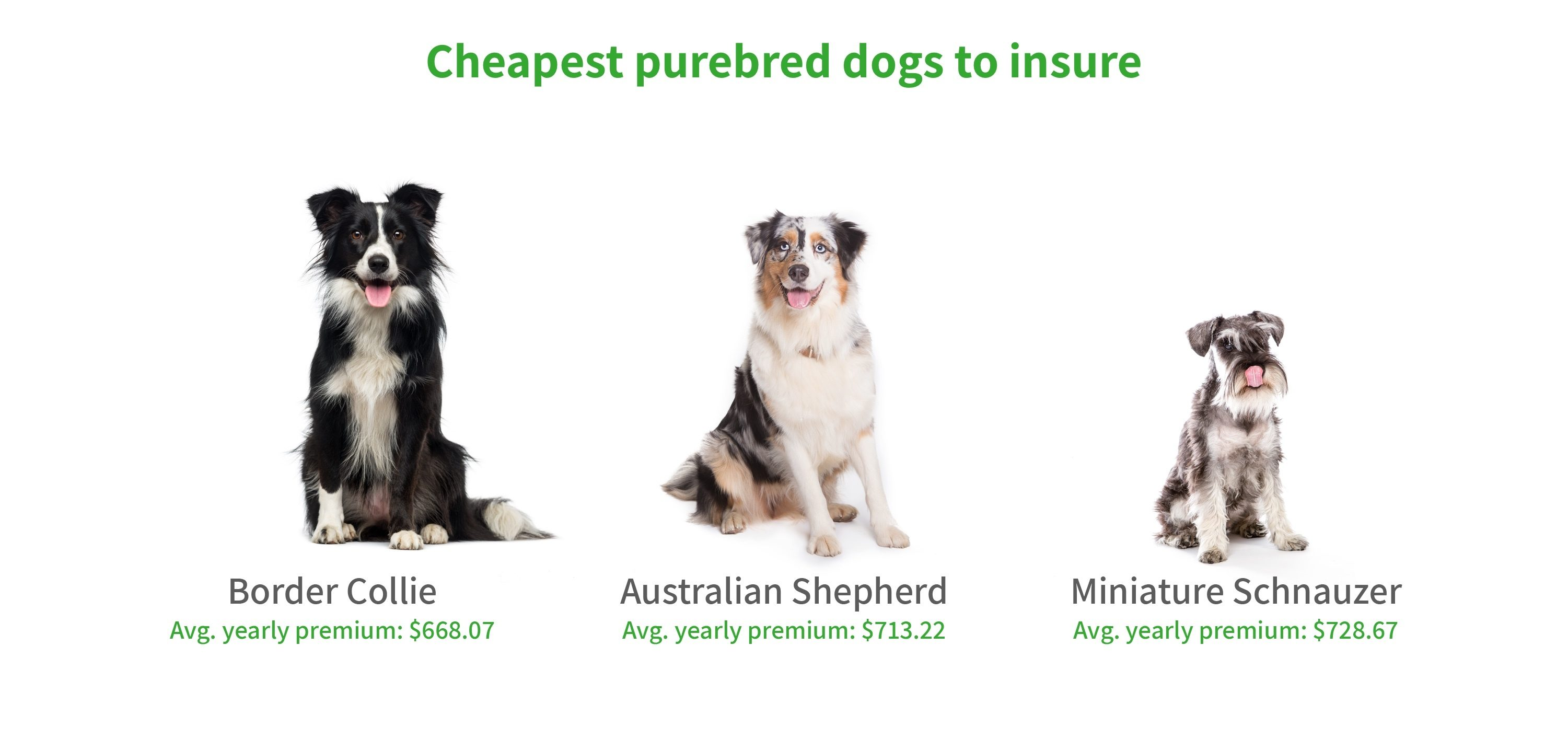 Graphic showing cheapest purebred dogs to insure