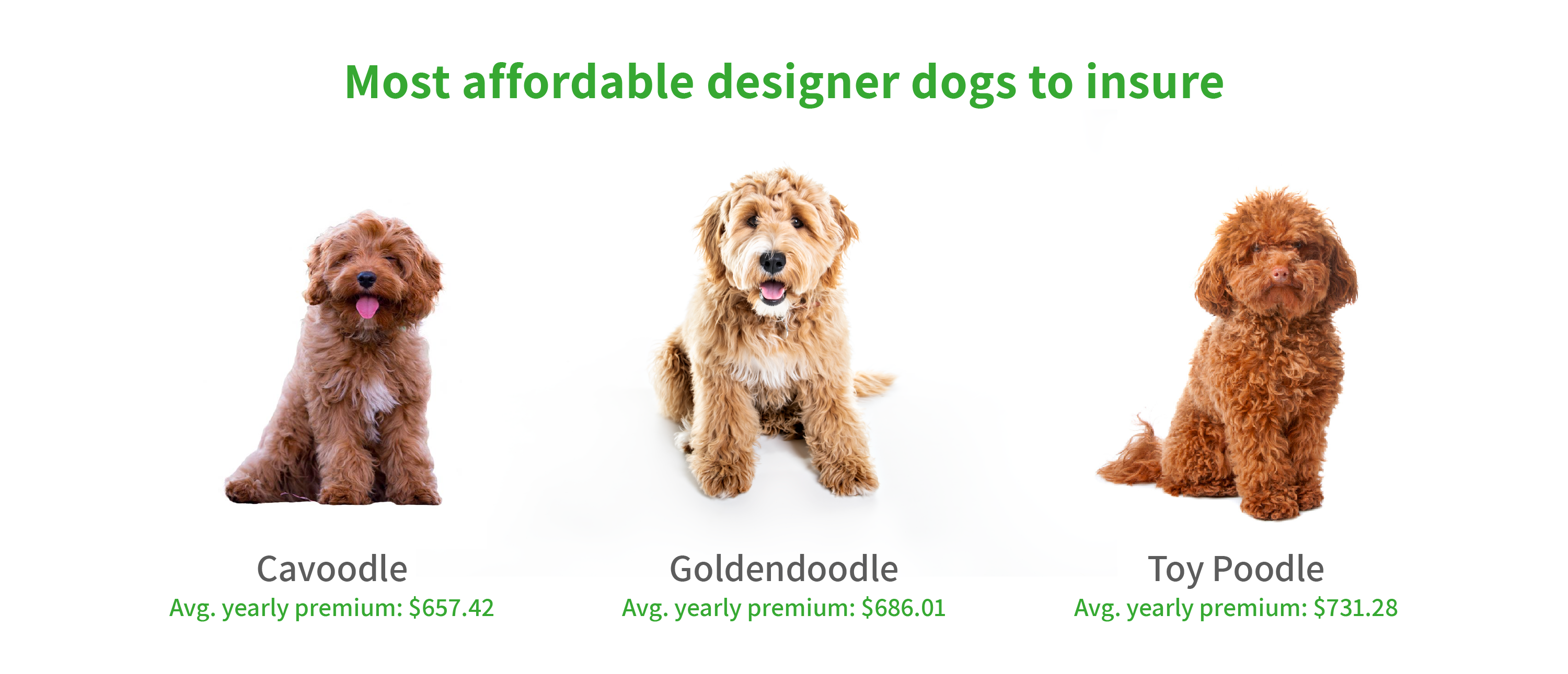 Graphic showing most affordable designer dogs to insure.