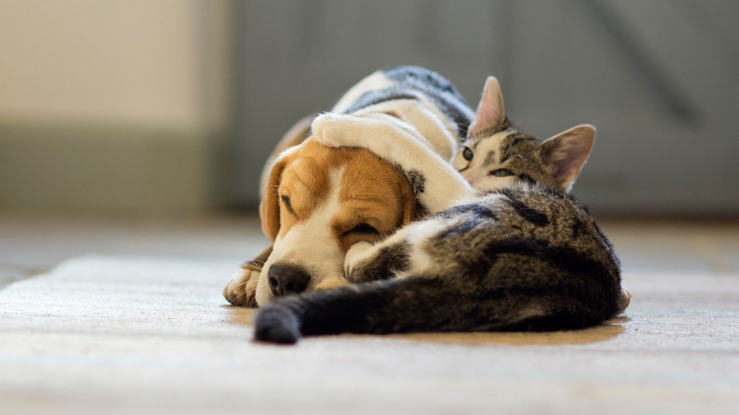 Dog and cat lying on the floor.