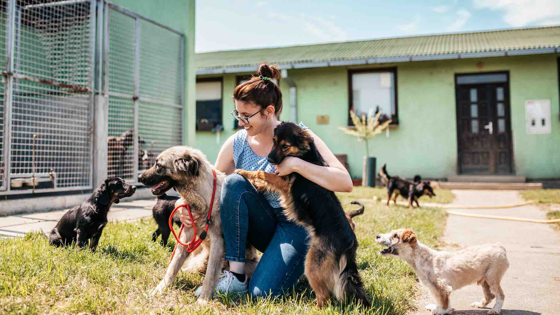 Person adopting dogs at shelter