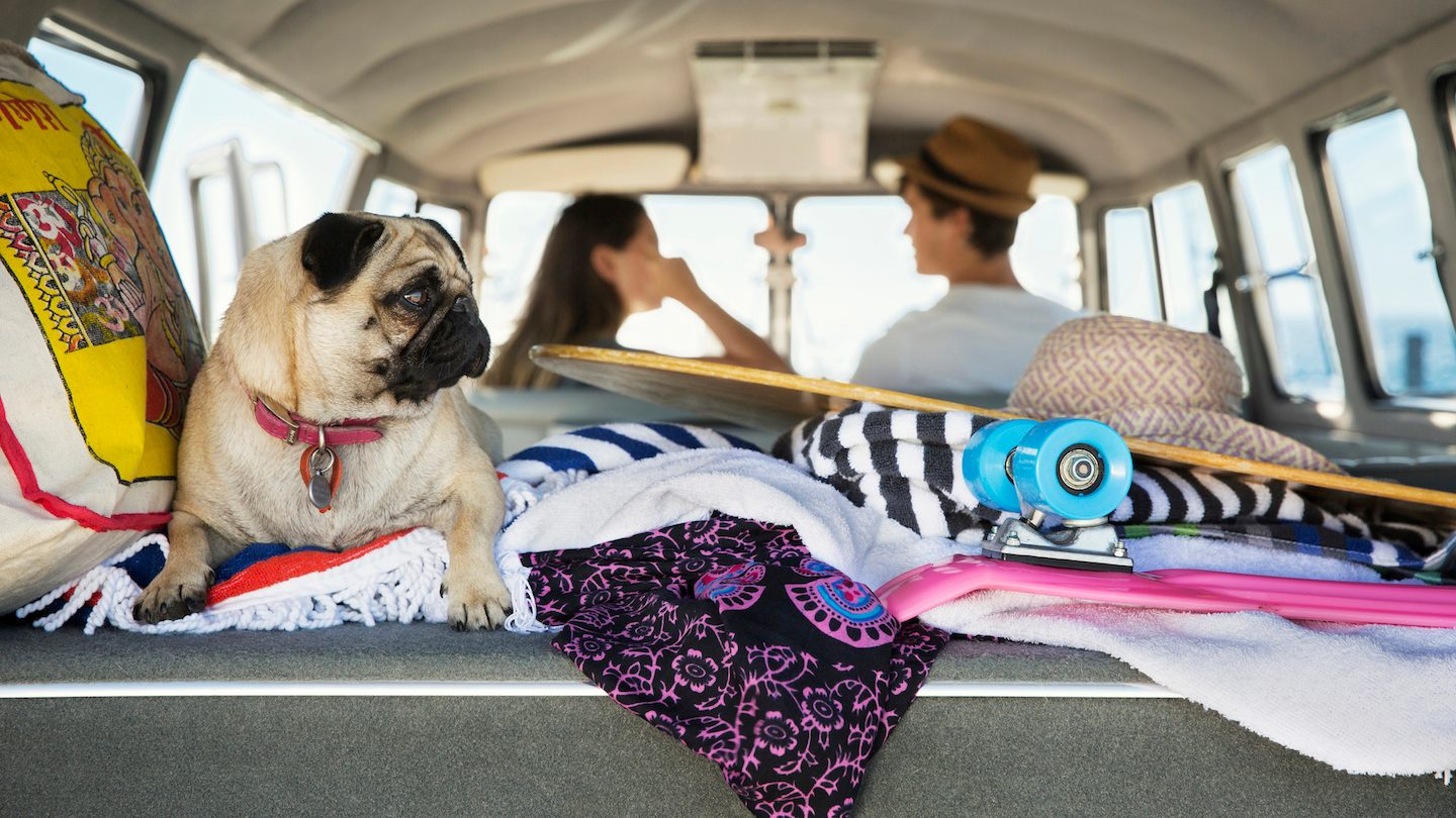 couple-in-car-with-dog-considering-summer-personal-loan