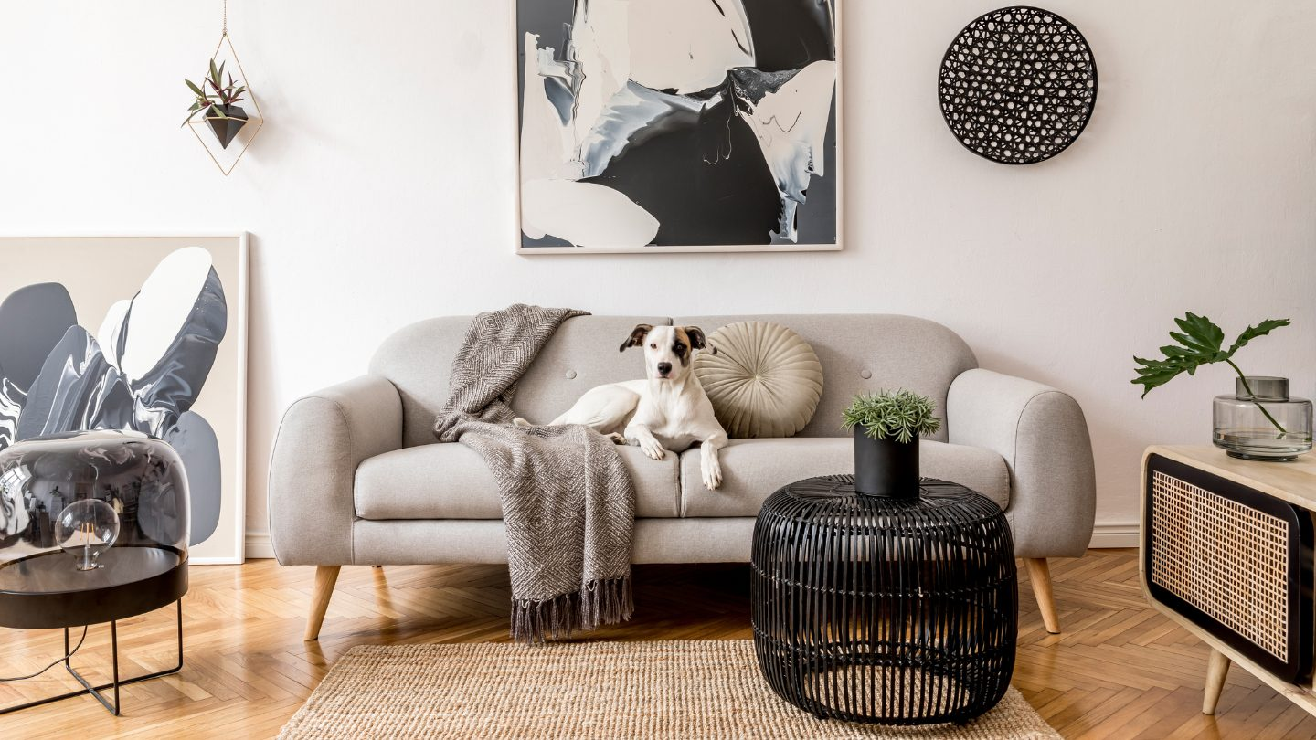 Small dog seated on apartment couch