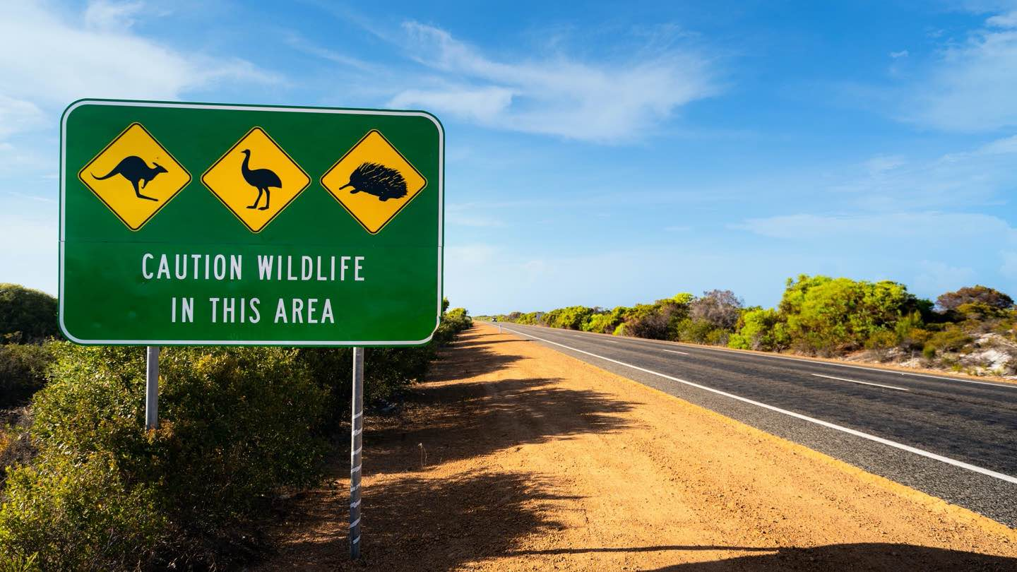 Sign on Australian highway that reads: 'Caution wildlife in this area'.