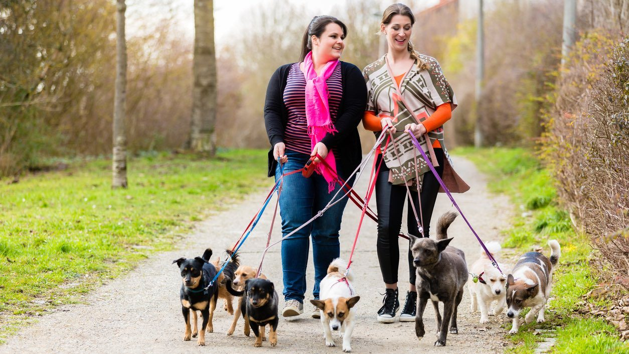 Two women walking a group of dogs, discussing pet insurance.