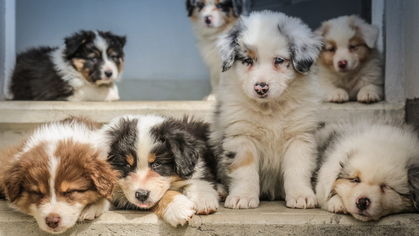40% of Aussies spend more on pets than self, online lenders & buying a used car: This week's best banking news