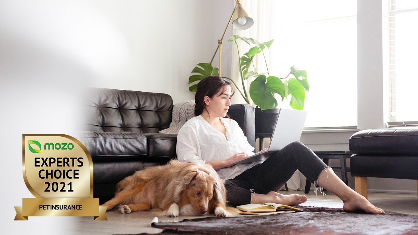 Person sitting on floor with dog, looking up pet insurance policies on laptop.