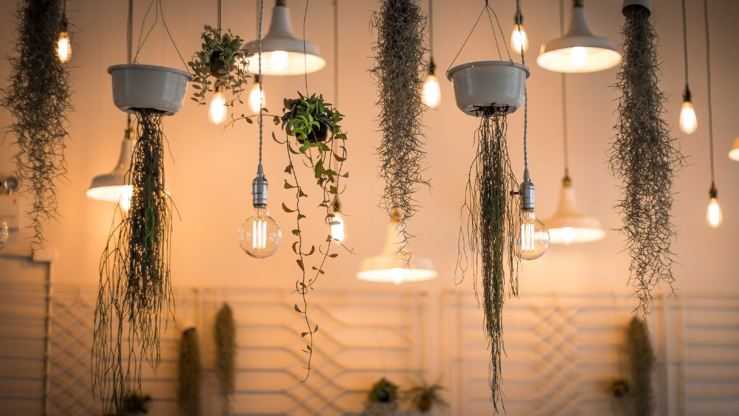 Lights and hanging plants in home