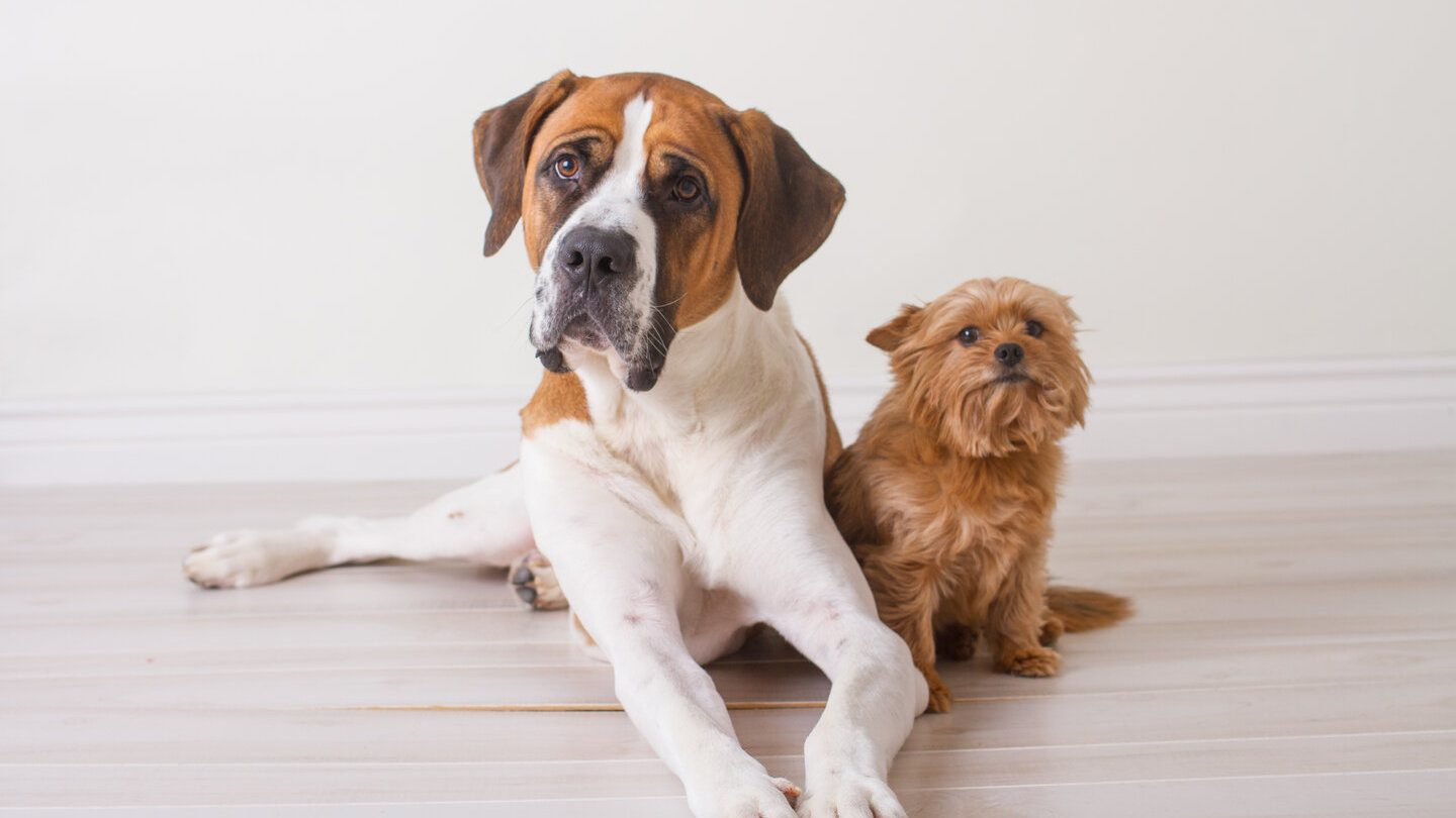 how much does it cost to insure my dog?