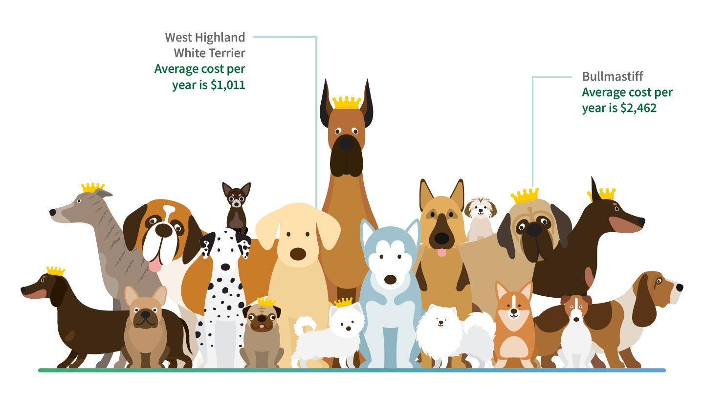 Pet Insurance report dog cost based on size