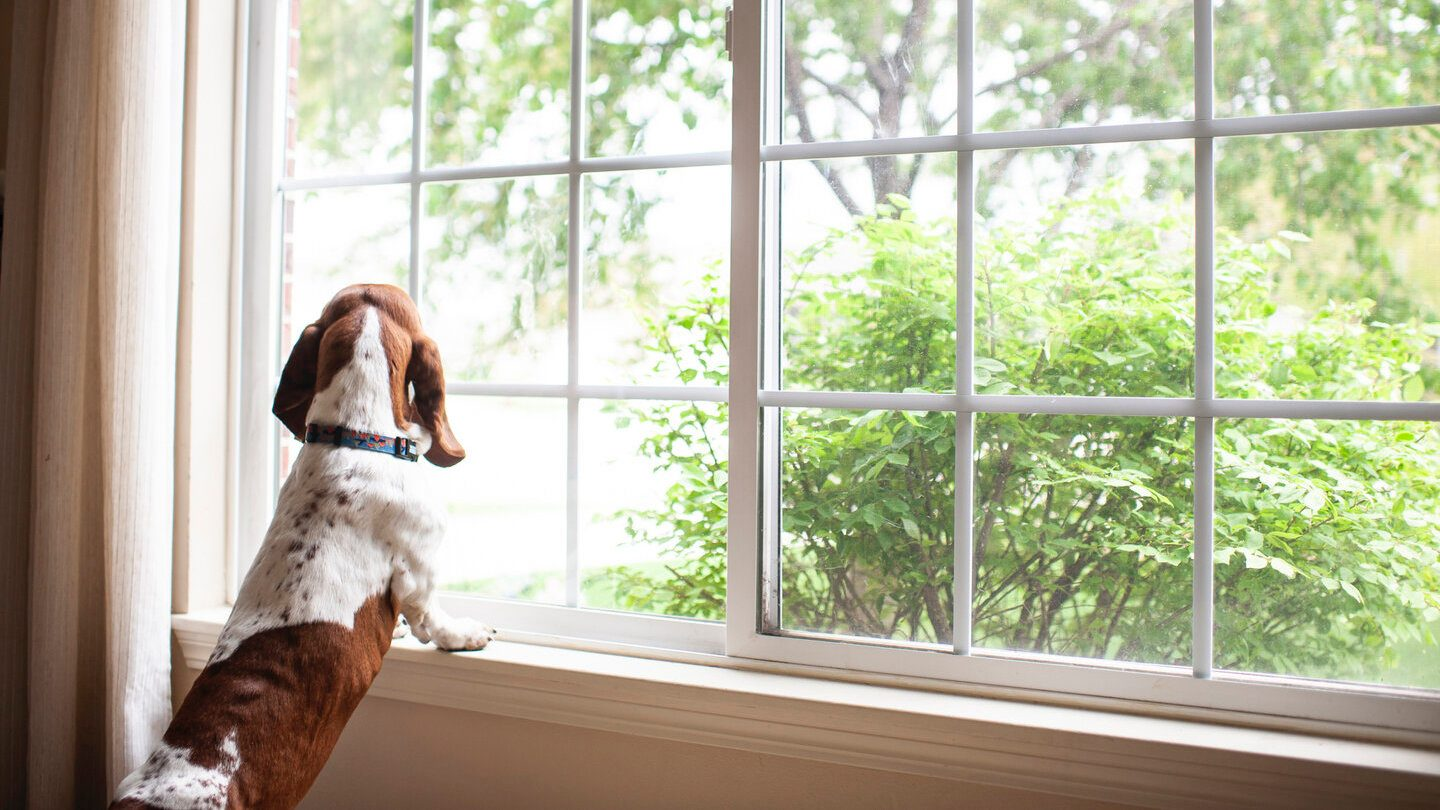 dog looking out the window of a rental property