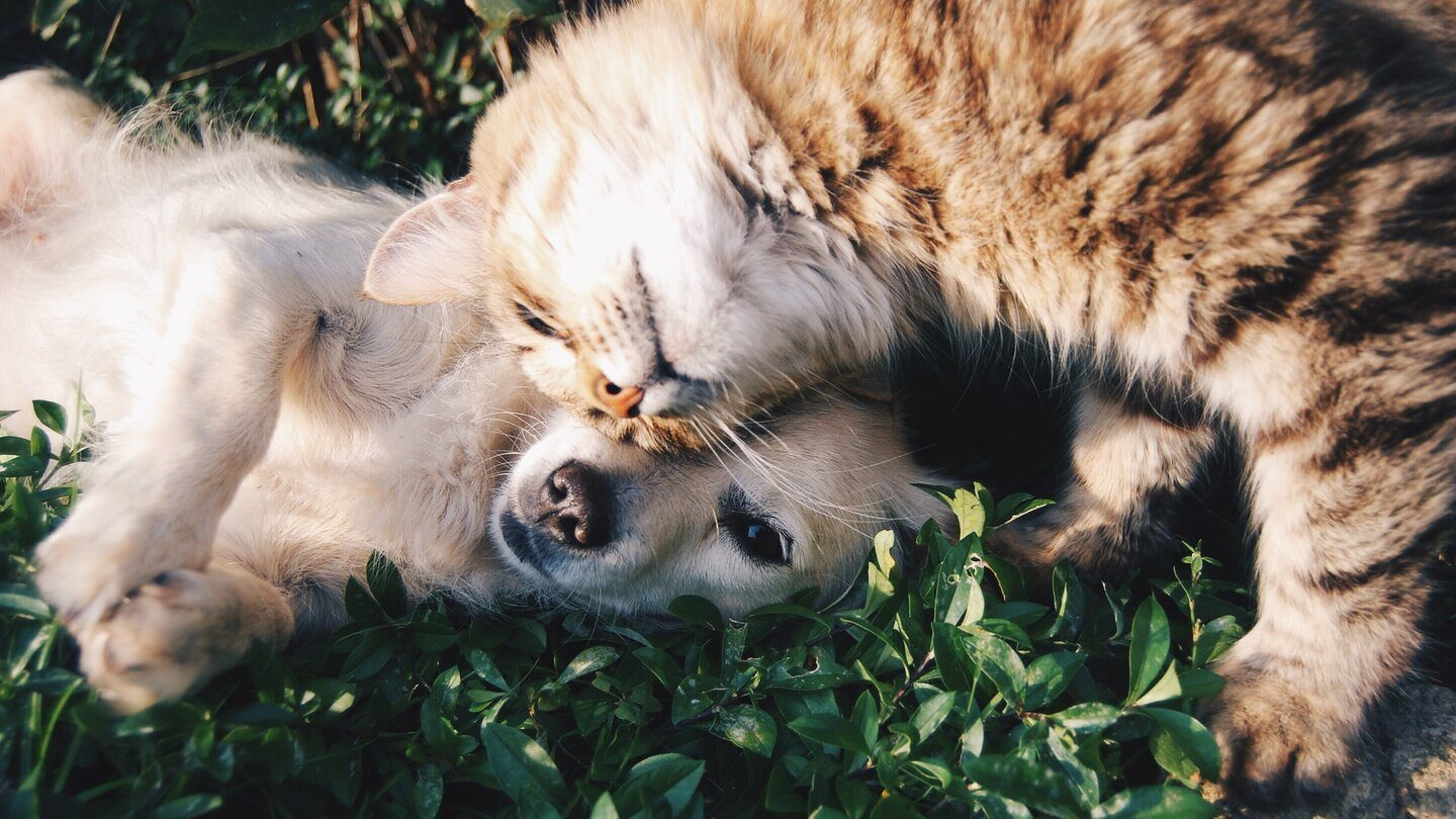 Costs of getting a family pet