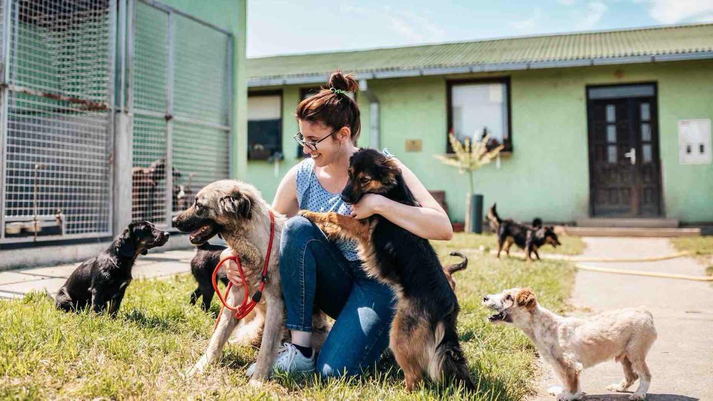 Woman surrounded by dogs.
