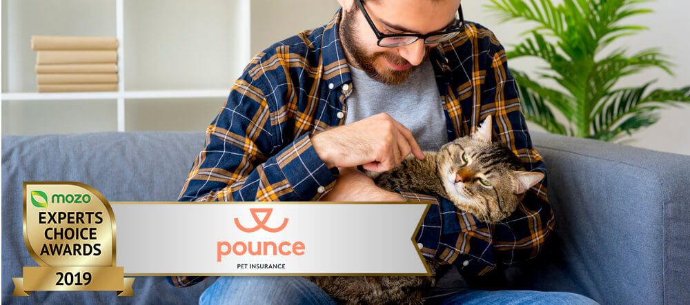 Man with glasses and a beard, sits on a blue sofa playing with cat. There is a graphic image in the corner of a 2019 Mozo Experts Choice badge for Pet Insurance.