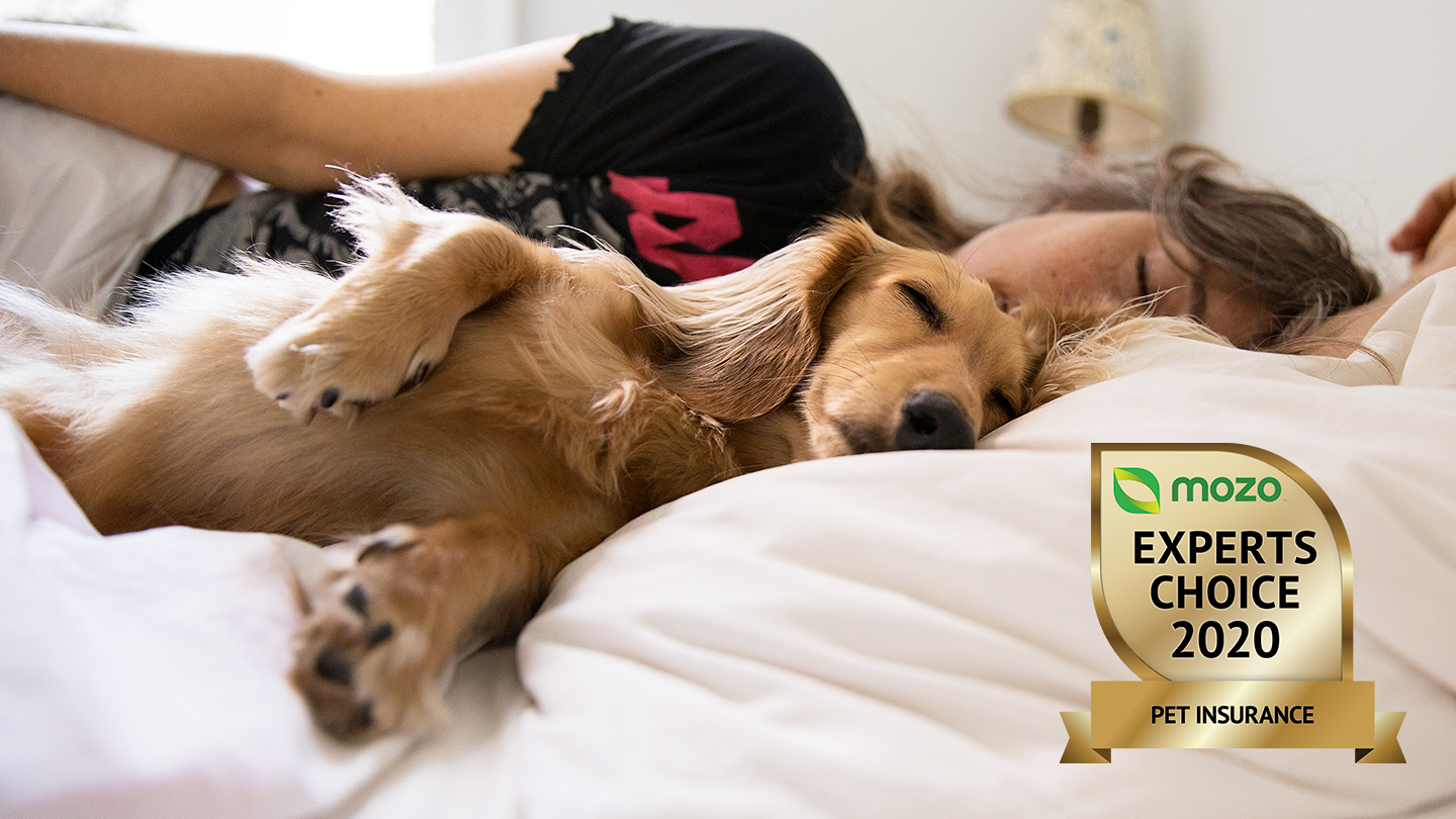 Person lying on bed with pet dog. There is a graphic of Mozo Experts Choice 2020 award badge for Pet Insurance in the corner.